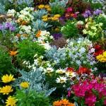 flower-garden-634578_640